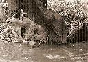 Technique de pêche au poisson-chat