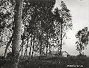 Eerst huis in de Muhila's
