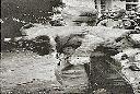 1957 - Albert et le lionceau