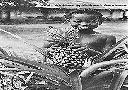 MANIEMA Jeune enfant (Ananas)