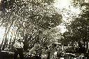 1953 - Dans notre belle allée d'eucalyptus à Kandefwe