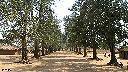 Kalemie  - Sur la route de Niemba - Village de Katchelewa
