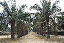 Kalemie - Sur la route de Kabimba (Kasanga-M'Toa)